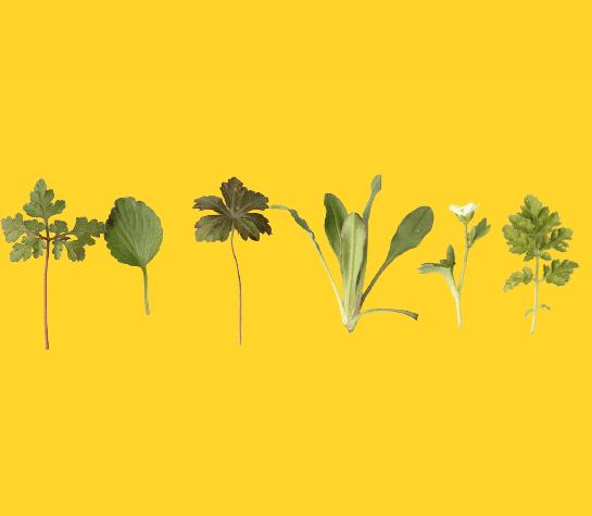 How-herbs-have-a-secret-healing-power